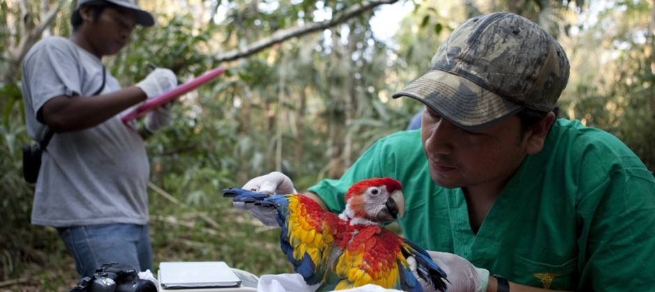 Veterinary medicine for conservation